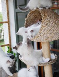 Alte Katze Frisst Viel Und Wird Immer Dünner