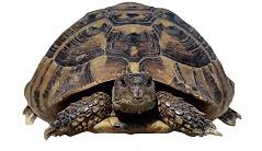 Kleiner Kühlschrank Für Schildkröten : Tierwissen fÜr kids: die schildkröte verband deutscher