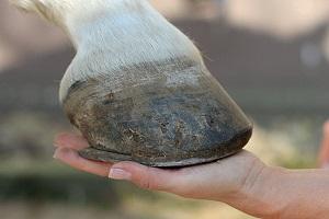 201606 Pferd1